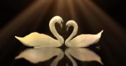 爱情的花朵总有一只在为你绽放